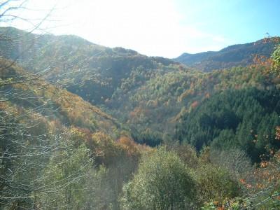 Automne, Autumn
