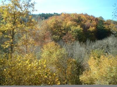 Automne; Autumn