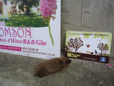 This hedgehog plonked itself down infront of my sign, literally one week after my garden received its official label as a `refuge` for wildlife.   Then it went to sleep.