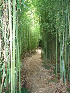 Jardin de bamboos