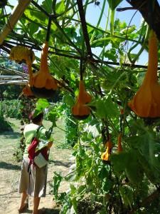 Jardin extraordinaire (4)