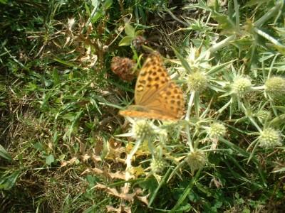 fleurs sauvage et papillon