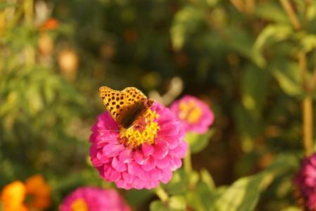 garden jardin (1)