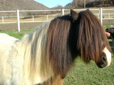 horse riding (1)
