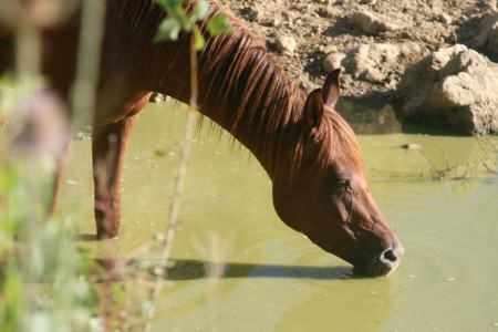 horse riding (4)