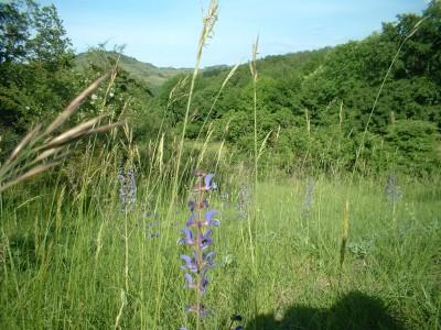 wild flowers fleurs (1)