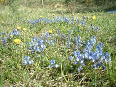 wild flowers fleurs (10)