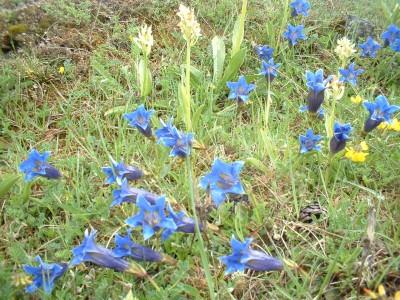 wild flowers fleurs (12)