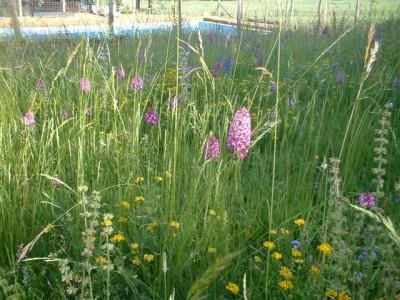 wild flowers fleurs (17)