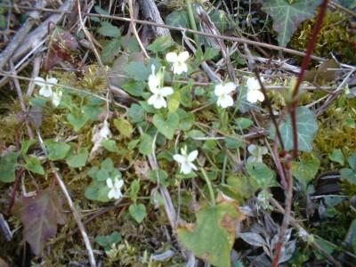 wild flowers fleurs (2)