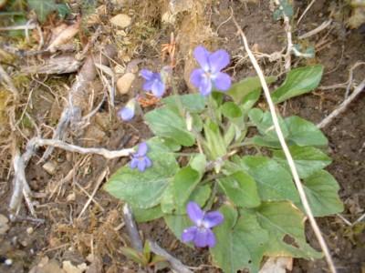 wild flowers fleurs (3)