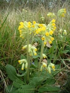 wild flowers fleurs (6)