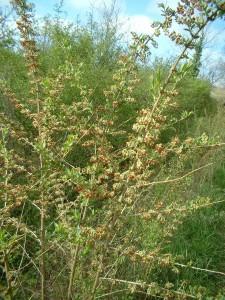 wild flowers fleurs (8)